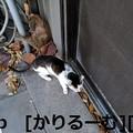 Photos: 2018/12/09 猫ハナ(はな)写真 KIMG0254
