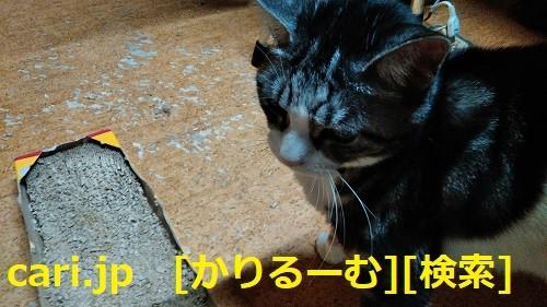 美しき数学の世界と、難問を解く楽しさとは・・ cari.jp