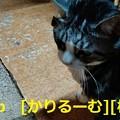 Photos: 美しき数学の世界と、難問を解く楽しさとは・・ cari.jp