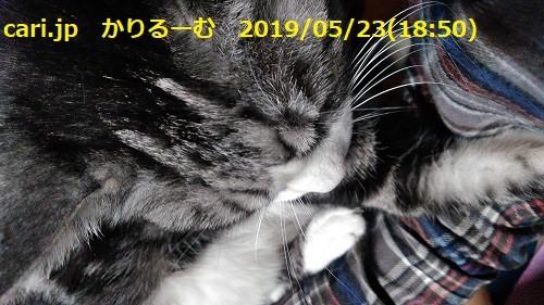 2019年5月分 鈴木社長の日誌・日記・備忘 cari.jp