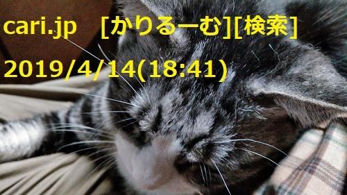 2019/04/14(18:41)猫写真 cari.jp