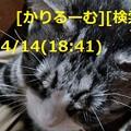 Photos: 2019/04/14(18:41)猫写真 cari.jp