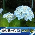 Photos: 人気の家計簿アプリ! cari.jp