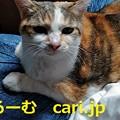 Photos: 2019年12月11日 猫写真 cari.jp