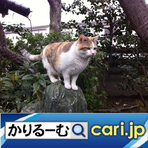 Photos: 全国に広がる、コラボ店! cari.jp