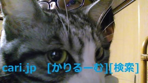 2018年12月28日猫スズ(すず)の写真 cari.jp