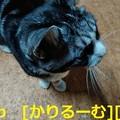 Photos: 2018年12月24日猫すず(スズ)の写真 cari.jp