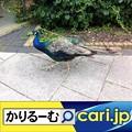 Photos: GWは自動車メーカーが設立した企業博物館へ! cari.jp
