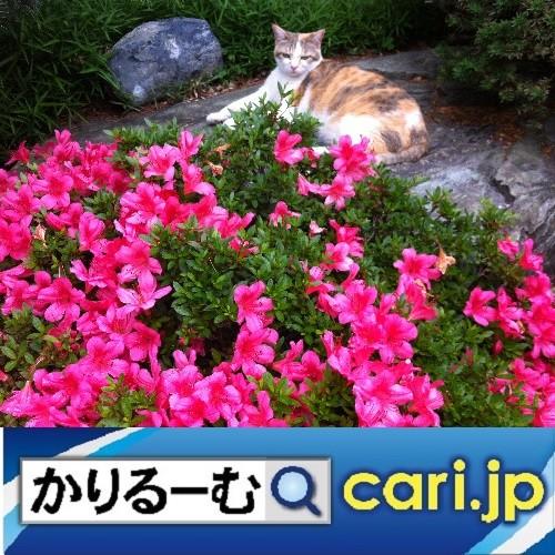 Photos: 無料提供される学習教材 cari.jp