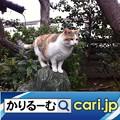 Photos: マンガ、映画、ドラマ、アプリが無料!! cari.jp
