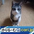 Photos: 国交省が推奨している「トラガール」とは!? cari.jp