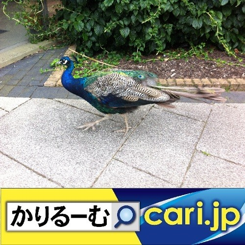 Photos: 【踊ってみた♪】の動画投稿が再びブーム cari.jp