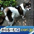 Photos: 今更ながら親孝行をしようと思っています cari.jp