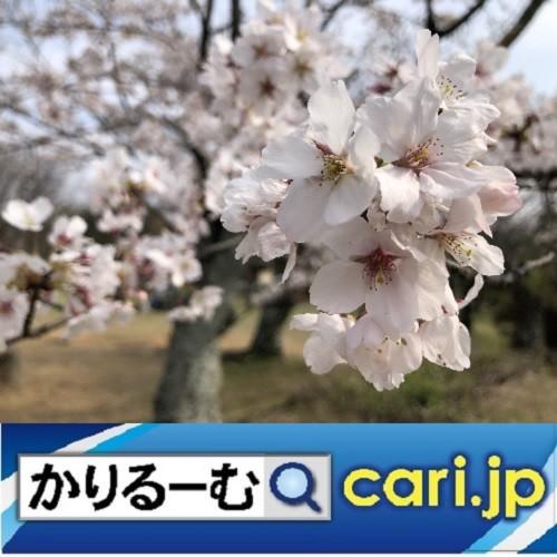 Photos: 非常事態の下でとりあえず思うこと。 cari.jp