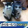 Photos: 3密(密閉、密集、密接)の回避 店が変わった cari.jp