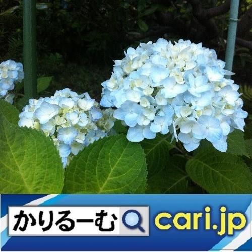 Photos: 2020年7月分 鈴木社長の日記・日誌・備忘 cari.jp