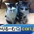 Photos: 2020年8月分 広報・記事等 cari.jp