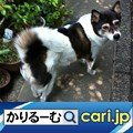 Photos: 2020年10月分 広報・記事等