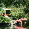 緑の架け橋