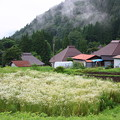 山里の棚田
