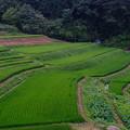 写真: 豊丘村の棚田