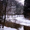 冬の森と小川
