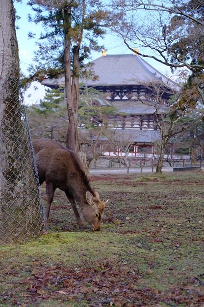 朝の東大寺