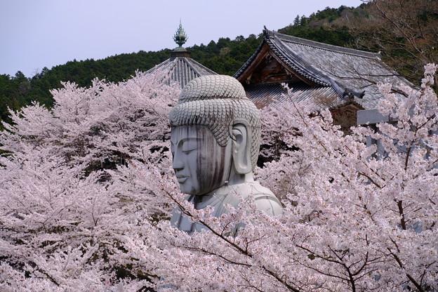 桜をまとう大仏(桜大仏)