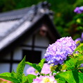 Photos: 五月晴れ