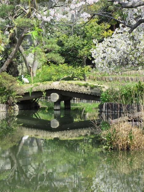 Photos: 橋と桜