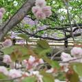 Photos: 花の隙間から
