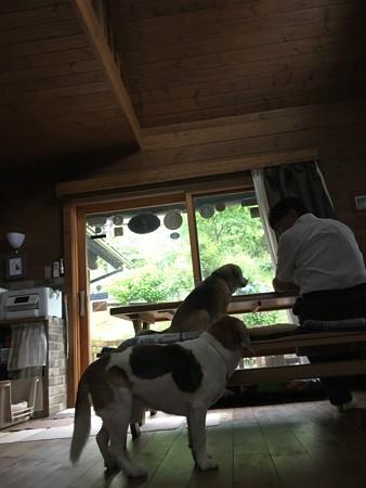 大きな窓側にテーブルを置いて、オープンカフェっぽく