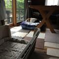 マリうみのベッドは定位置(テーブルの下にあるから、ある意味落ち着くかもね)