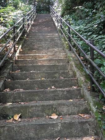 高台まで避難だから階段あるわな、、もう何段あるか数えてたけど忘れてしまった