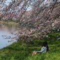 Photos: 土手での花見
