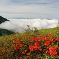 雲海とレンゲツツジ