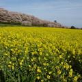 Photos: 菜の花畑に♪