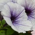 写真: 散歩道で咲く花ーB