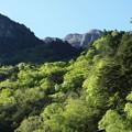 写真: 山にも新緑が