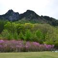 写真: 春の瑞牆山
