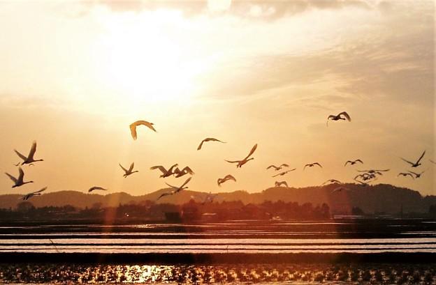 夕日と渡り鳥