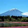 写真: 晴天の富士