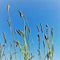 写真: 空に向かってーB