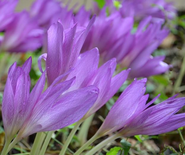 Photos: リバーサイドに咲く