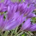 写真: リバーサイドに咲く