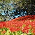 写真: 土手に咲く