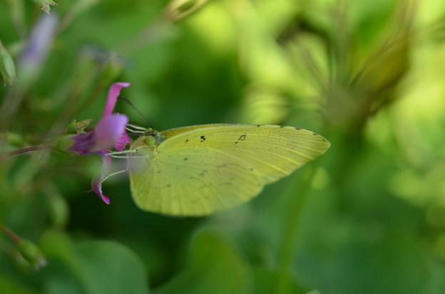 写真: チョットこの花は小さいかな