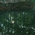 写真: 木漏れ日ー2