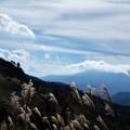 写真: 高原の秋