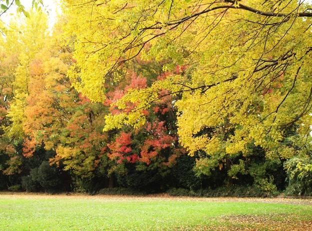 里の秋ー2